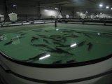 Производство ёмкостей для рыбного комплекса